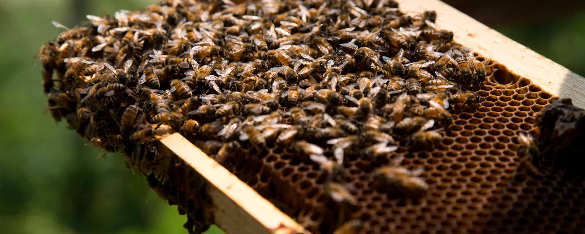 Bee Hives for Sale | Beekeeping Supplies | Busy Bees 'n' More